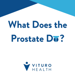 What Does the Prostate Do? | Vituro Health